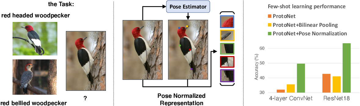 Figure 1 for Revisiting Pose-Normalization for Fine-Grained Few-Shot Recognition