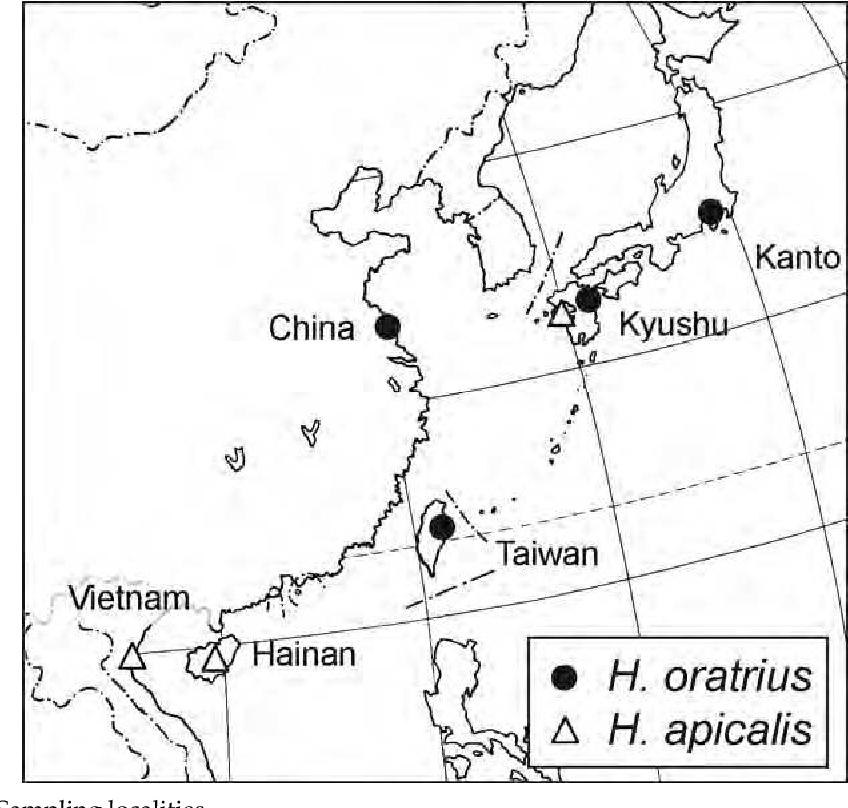 3 Passive Long Distance Migration Of Apterous Dryinid Wasps