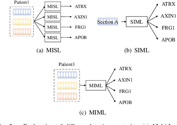 Figure 2 for Multi-Instance Multi-Label Learning for Gene Mutation Prediction in Hepatocellular Carcinoma