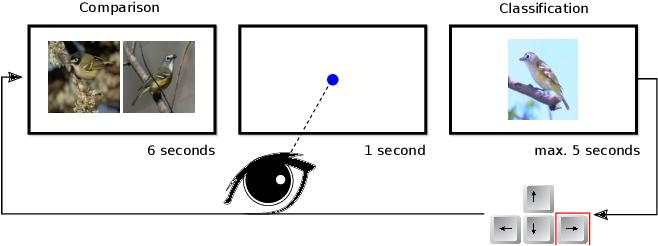 Figure 3 for Gaze Embeddings for Zero-Shot Image Classification
