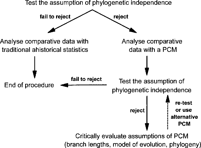 Fig. 1. Flow chart to identify the best course of action when analysing comparative data. Testing the assumption of independence before applying a phylogenetically based comparative method (PCM) can allow the identification of traits which are not phylogenetically autocorrelated, whereas testing the assumption of independence after the application of a PCM allows the identification of cases where the PCM has failed to account for the historical non-independence of taxonomic data points. If the latter occurs, this methodological approach advocates a re-evaluation of the assumptions of the PCM (i.e. model of evolution change, branch lengths, or phylogeny), and the re-test of the assumption of independence until it is satisfied or an alternative PCM is applied.