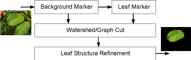 Figure 1 for Automatic Leaf Extraction from Outdoor Images