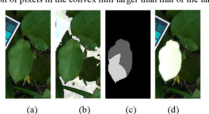 Figure 2 for Automatic Leaf Extraction from Outdoor Images