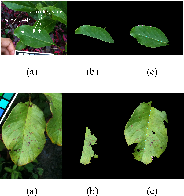 Figure 4 for Automatic Leaf Extraction from Outdoor Images