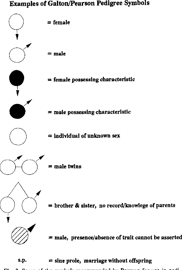 Figure 3 From The Cranes Foot The Rise Of The Pedigree In Human