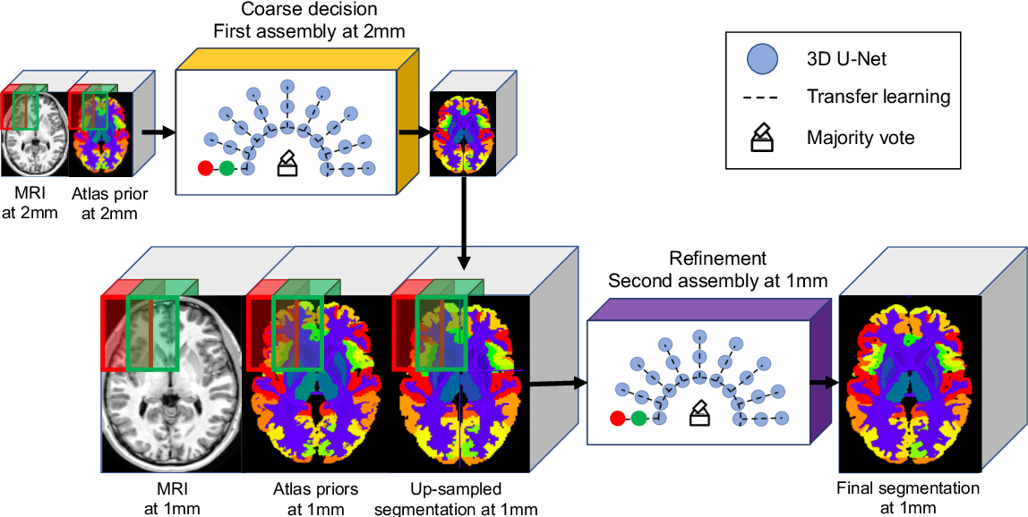Figure 1 for AssemblyNet: A large ensemble of CNNs for 3D Whole Brain MRI Segmentation