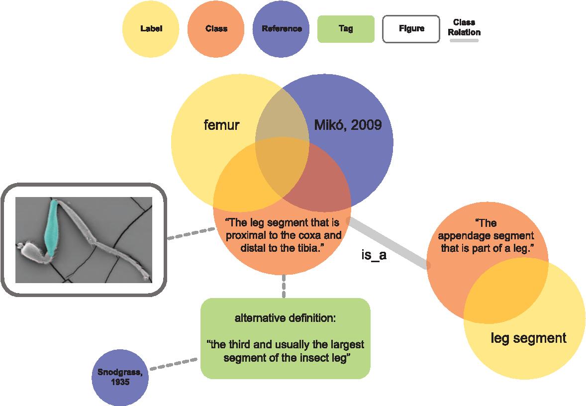 A Gross Anatomy Ontology for Hymenoptera - Semantic Scholar