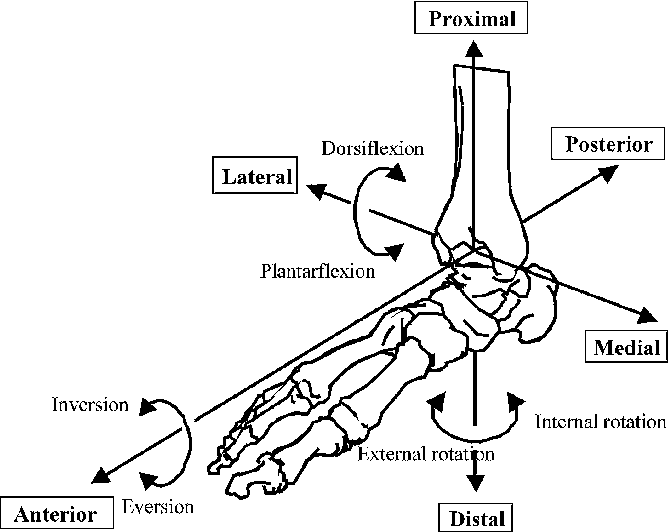 The Effect Of An Ankle Brace On The 3 Dimensional Kinematics And