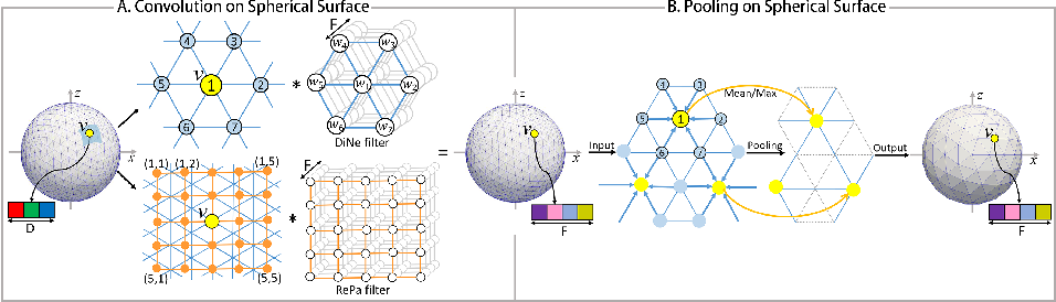 Figure 3 for Spherical U-Net on Cortical Surfaces: Methods and Applications