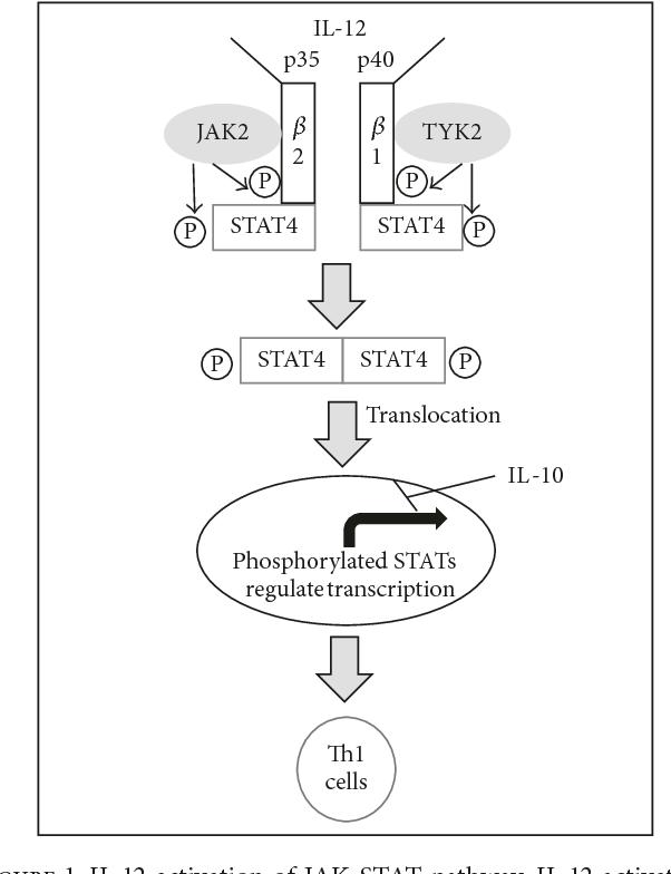 P35 Diagram