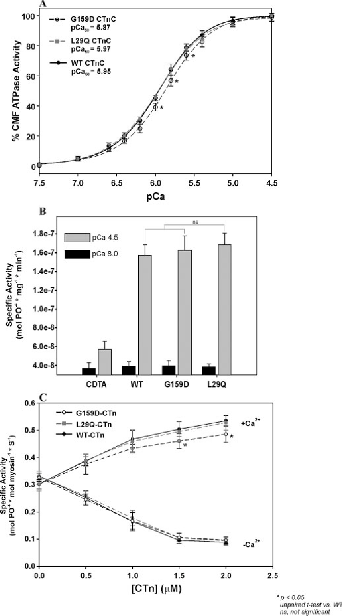 FIGURE 2. The effects of skinned cardiac myofibrils and regulated actomyosin filaments reconstituted with CTnC mutants. A, Ca2 sensitivity of ATPase activity from skinned cardiac myofibrils reconstituted with the G159D and L29Q CTnC. B, a comparison of the CDTA-treated and CTnC-reconstituted myofibrillar ATPase activities in pCa 8.0 (black) and pCa 4.5 (gray) solutions. C, effect of CTnC mutations on the activation ( Ca2 ) and inhibition ( Ca2 ) of regulated actinTm-activated myosin ATPase activity. CTn containing G159D, L29Q, or WT CTnC was mixed with actin, Tm, and myosin to reconstitute the regulated actomyosin filaments. The protein concentrations used are as follows: 3.5 M F-actin, 1.0 M Tm, 0.6 M myosin, and 0–2.0 M CTn. At all concentrations of CTn (0–2.0 M), the specific ATPase activities are measured in the presence of 0.1 mM free Ca2 ( Ca2 ) or 1.0 mM EGTA ( Ca2 ). All experiments were done in the presence of 1.0 mM free Mg2 . Data are summarized in Table 2.