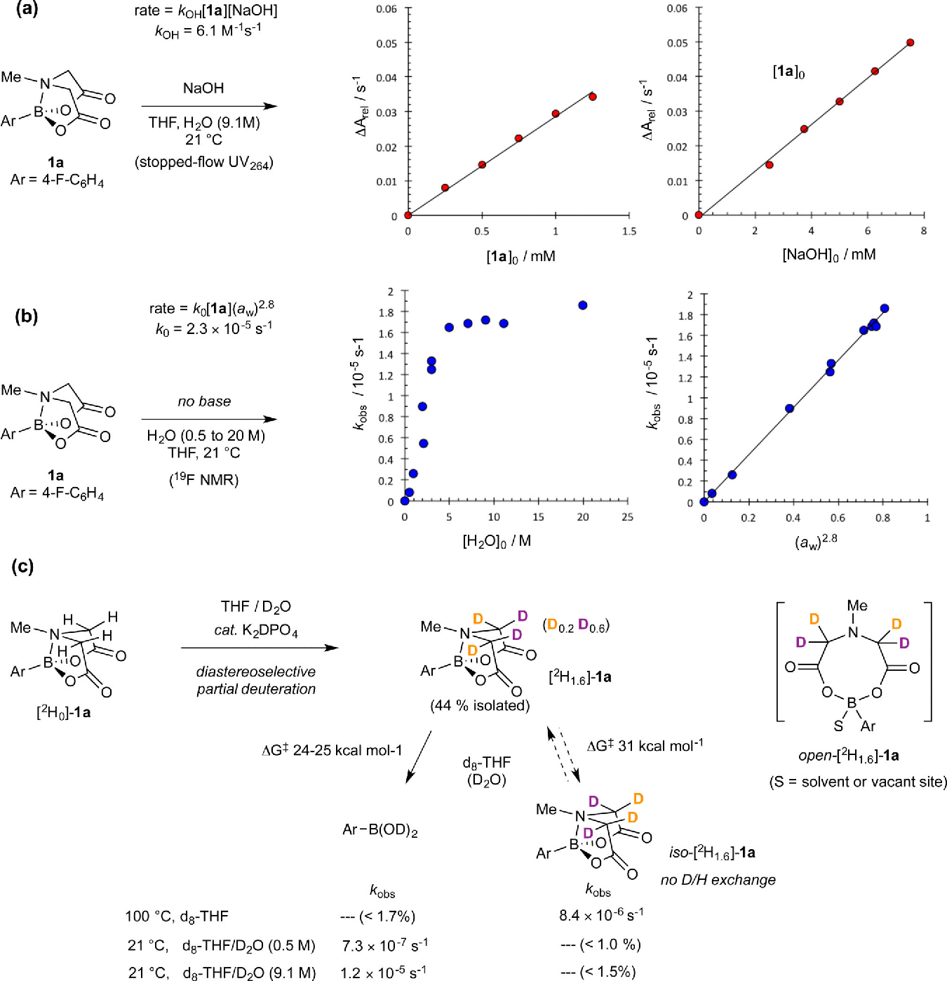 MIDA boronates are hydrolysed fast and slow by two different
