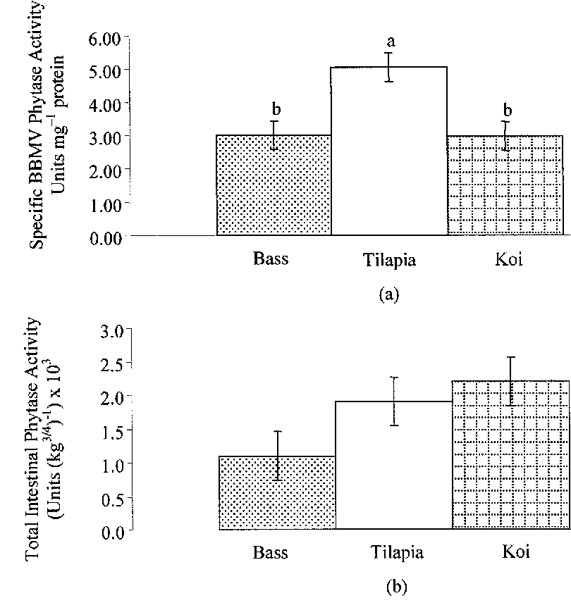 Figure 1. Specific intestinal brush border membrane (BBM) phytase activity (a) and total intestinal phytase activity (b) in hybrid striped bass, tilapia and koi. One unit of phytase activity is defined as that amount of enzyme releasing one nmol inorganic phosphate from Na-phytate min−1. Means (n = 3) on the same graph with different letters are significantly different as determined by the LSD means comparison test (P ≤ 0.05). Significance level of the ANOVA model: (a) P = 0.0231; (b) P = 0.1781. Vertical bars indicate the pooled SEM: (a) 0.44 units mg−1 protein; (b) 360 units (kg3/4)−1.