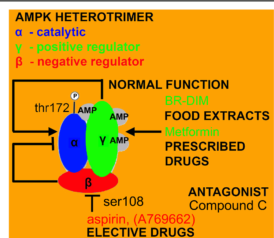 Why AMPK agonists not known to be stressors may surprisingly