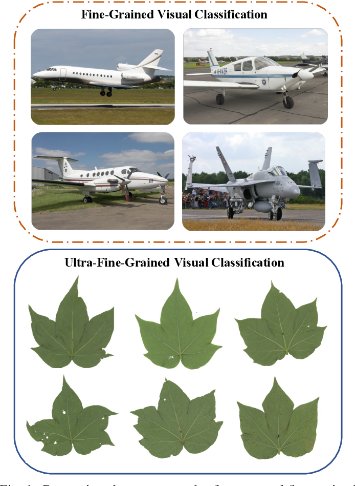 Figure 1 for Mask-Guided Feature Extraction and Augmentation for Ultra-Fine-Grained Visual Categorization