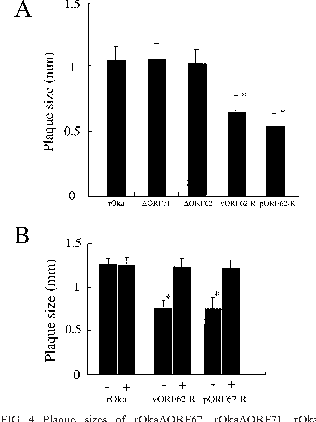 FIG. 4. Plaque sizes of rOka ORF62, rOka ORF71, rOka ORF62/71(vORF62-R), and rOka ORF62/71(pORF62-R) and restoration of rOka ORF62/71(vORF62-R) and rOka ORF62/ 71(pORF62-R) plaque size by gE complementation. (A) The mean plaque size ( standard deviation) was determined for rOka and each mutant virus by measuring 40 plaques in melanoma cells. The asterisks indicate a significant difference from rOka plaque size (P 0.001). (B) A doxycycline-inducible gE-expressing melanoma cell line, the Met-gE cell line, was used to examine the effect of gE complementation on plaque size (33). The mean plaque size ( standard deviation) was determined for 40 plaques for rOka, rOka ORF62/ 71(vORF62-R), and rOka ORF62/71(pORF62-R) in the presence ( ) and absence ( ) of doxycycline.