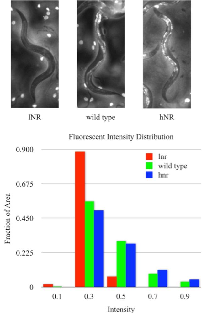 Figure 3 for Towards automated high-throughput screening of C. elegans on agar