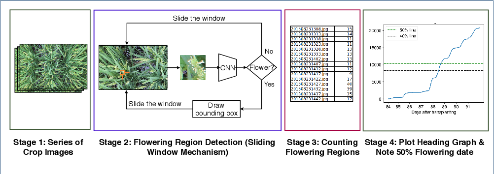 Figure 2 for Automatic estimation of heading date of paddy rice using deep learning