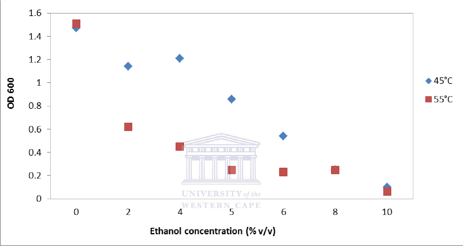 Figure 4.2: The effect of growth temperature on the ethanol tolerance of G. thermoglucosidasius NCIMB 11955. Cultures were grown for 16 hours on 2 x TY medium supplemented with ethanol before the final optical density (OD600) was recorded. Cultures with a final OD600 of ≥ 0.3 were regarded as viable.