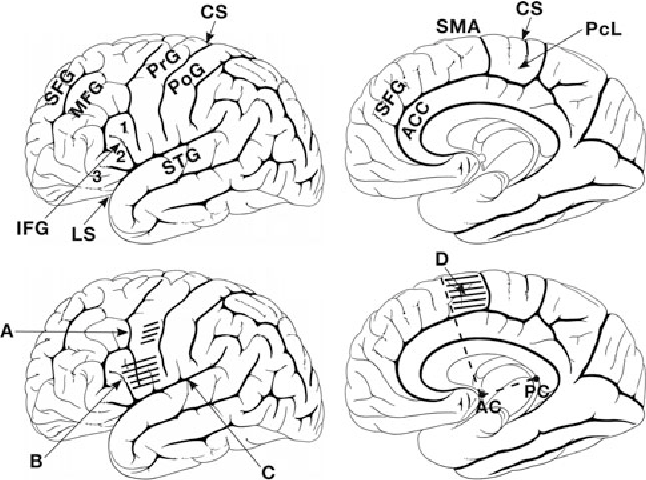 Figure 1 From The Contributions Of The Insula To Speech Production