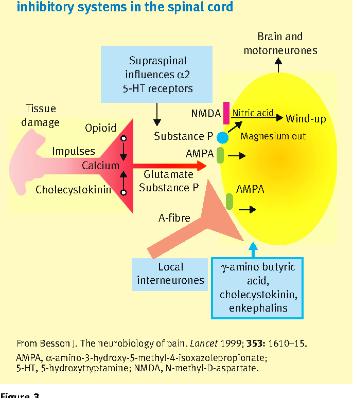 Anatomy , physiology and pharmacology of pain - Semantic Scholar