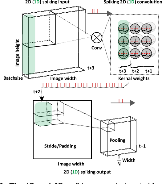 Figure 2 for Tuning Convolutional Spiking Neural Network with Biologically-plausible Reward Propagation