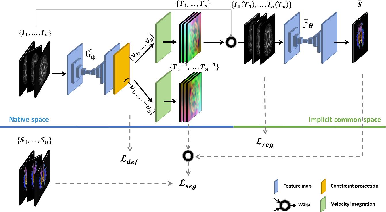 Figure 1 for Learning unbiased registration and joint segmentation: evaluation on longitudinal diffusion MRI