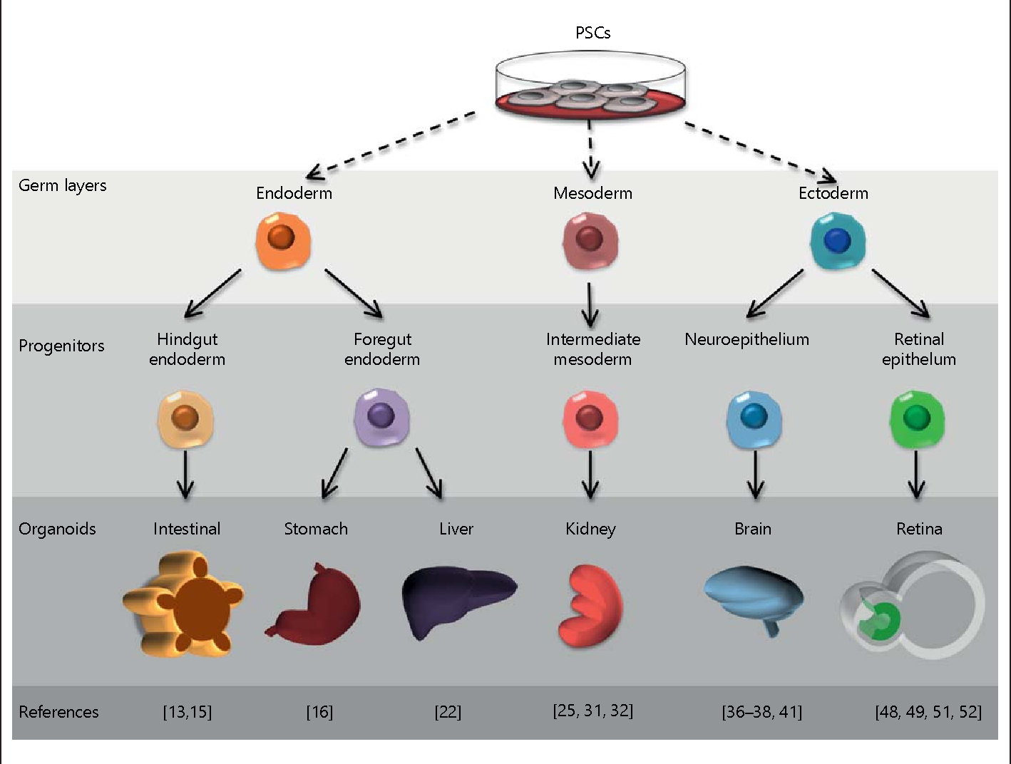 Neurotoxicity Predicted By Organoids >> Figure 1 From Organoid Models And Applications In Biomedical