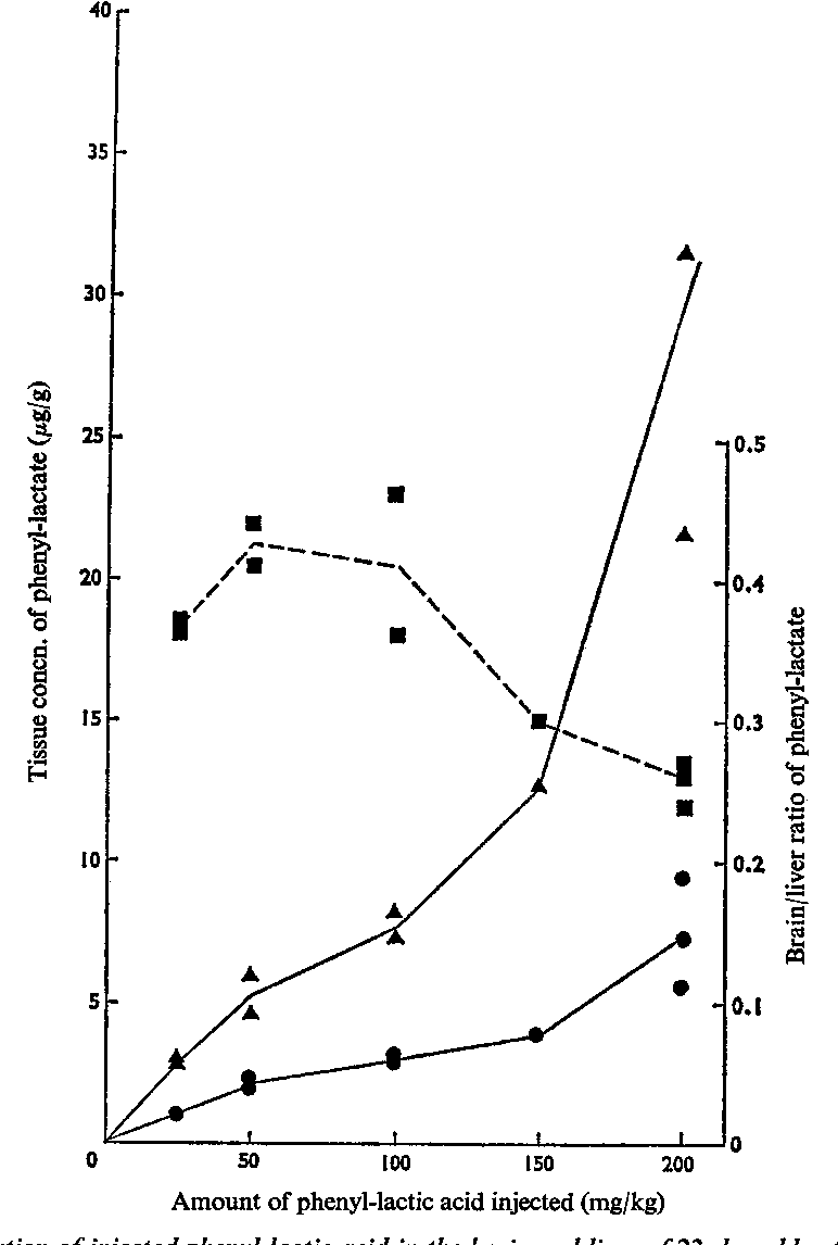 Fig. 1. Distribution of injected phenyl-lactic acid in the brain and liver of 23-day-old rats