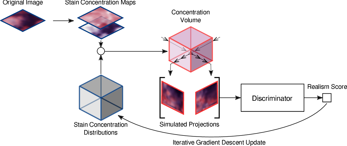 Figure 3 for Inferring a Third Spatial Dimension from 2D Histological Images