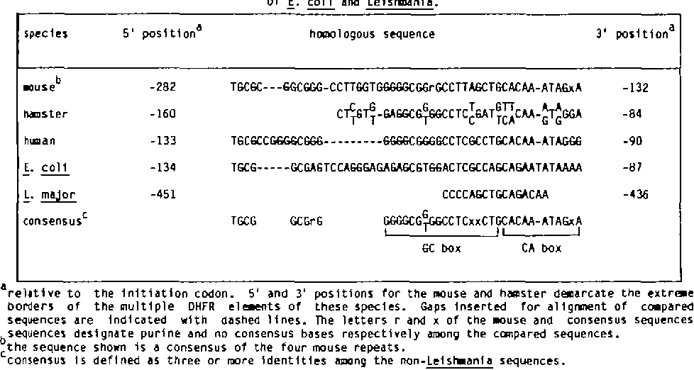 Table 1 from Sequence and S1 nuclease mapping of the 5 ... on