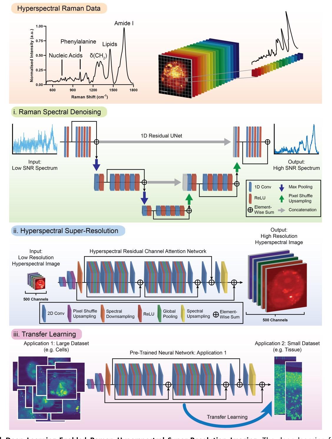 Figure 1 for High-throughput molecular imaging via deep learning enabled Raman spectroscopy