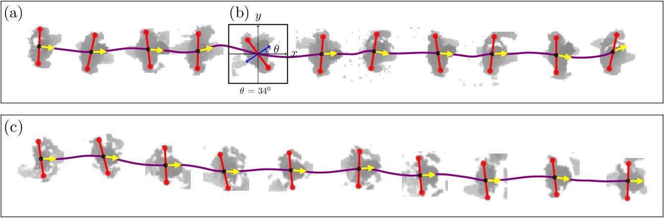 Figure 2 for Pedestrian orientation dynamics from high-fidelity measurements