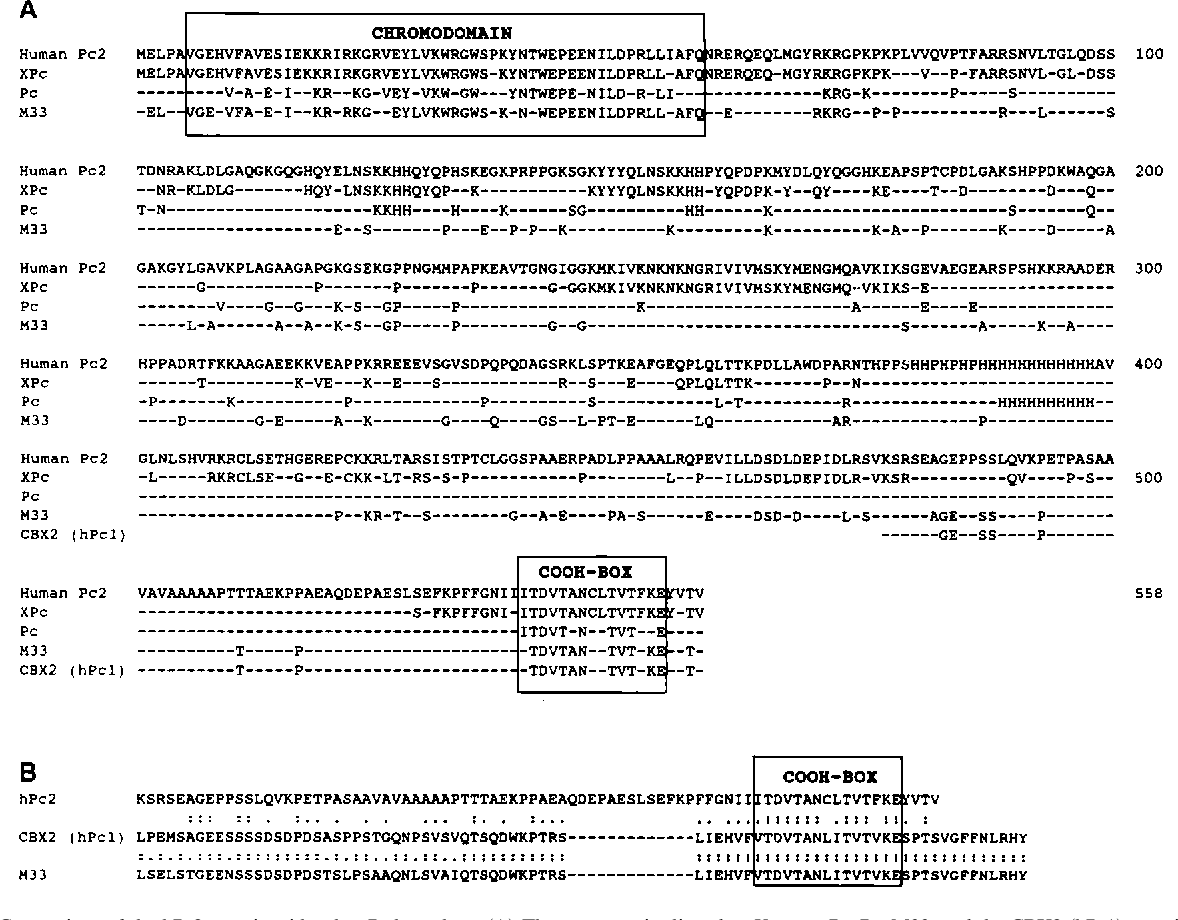 PDF] Interference with the expression of a novel human polycomb