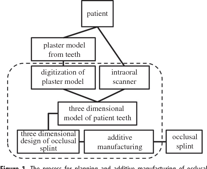Occlusal Surface Layer Of Right First Upper Molar Tooth Semantic