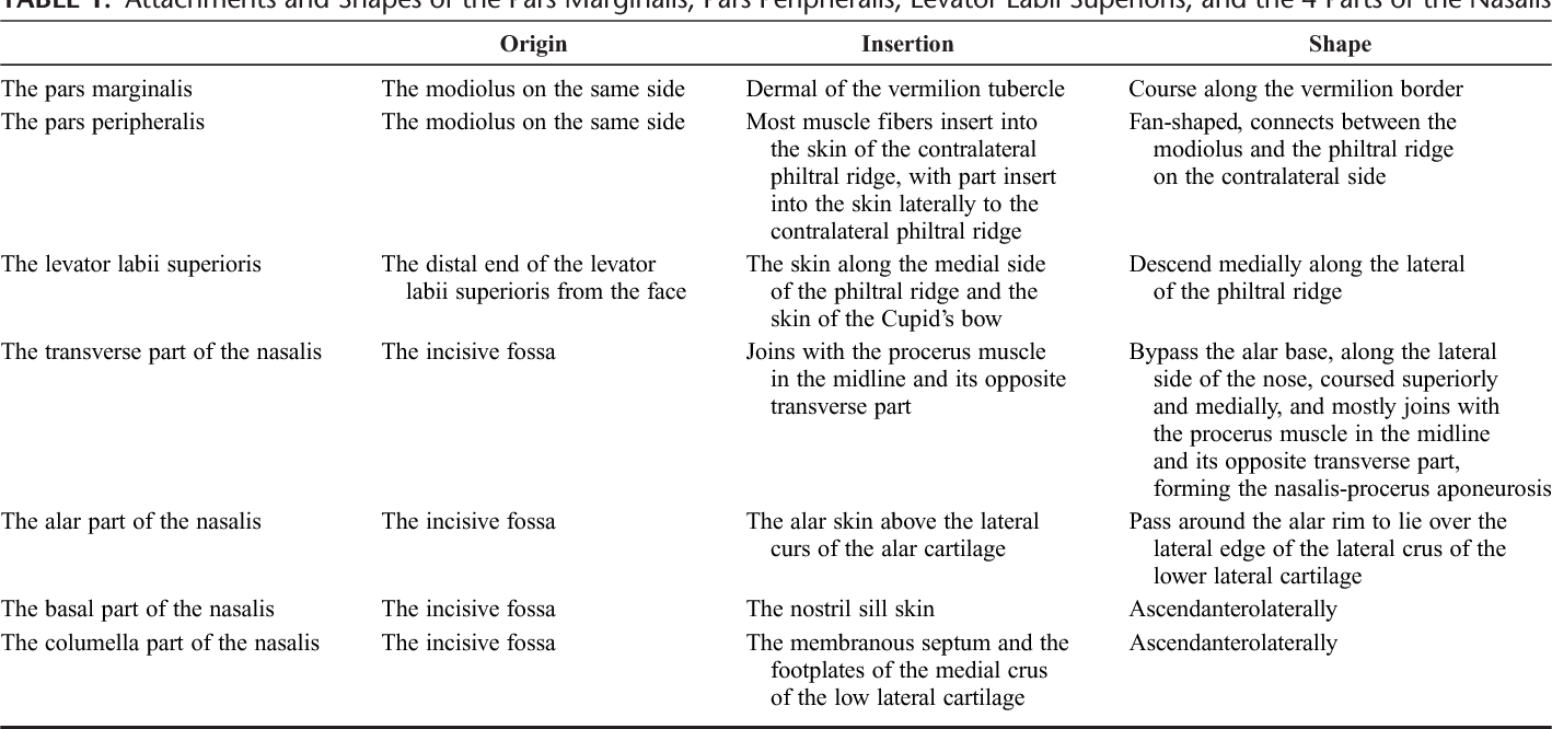 Detailed Anatomy of the Nasolabial Muscle in Human Fetuses as ...