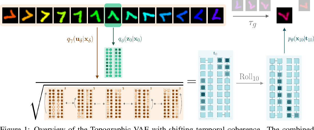 Figure 1 for Topographic VAEs learn Equivariant Capsules