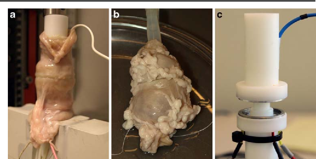 Fig. 1 a Laboratory anastomotic device while fusing a porcine colonic sample. b Burst pressure measurement of fused porcine colon samples. c Laboratory anastomotic device
