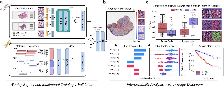 Figure 1 for Pan-Cancer Integrative Histology-Genomic Analysis via Interpretable Multimodal Deep Learning