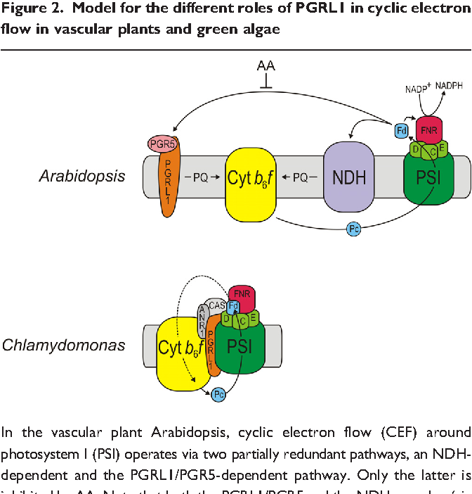 Chloroplast evolution structure and functions semantic scholar figure 2 ccuart Choice Image