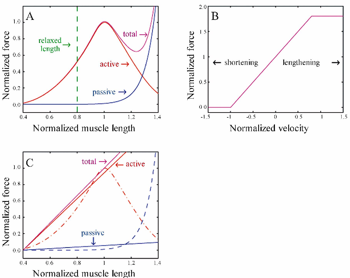 A dynamic model of the octopus arm i biomechanics of the octopus figure 4 pooptronica