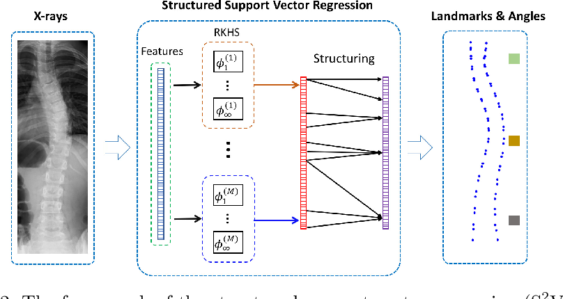 Figure 2 for Direct Estimation of Spinal Cobb Angles by Structured Multi-Output Regression