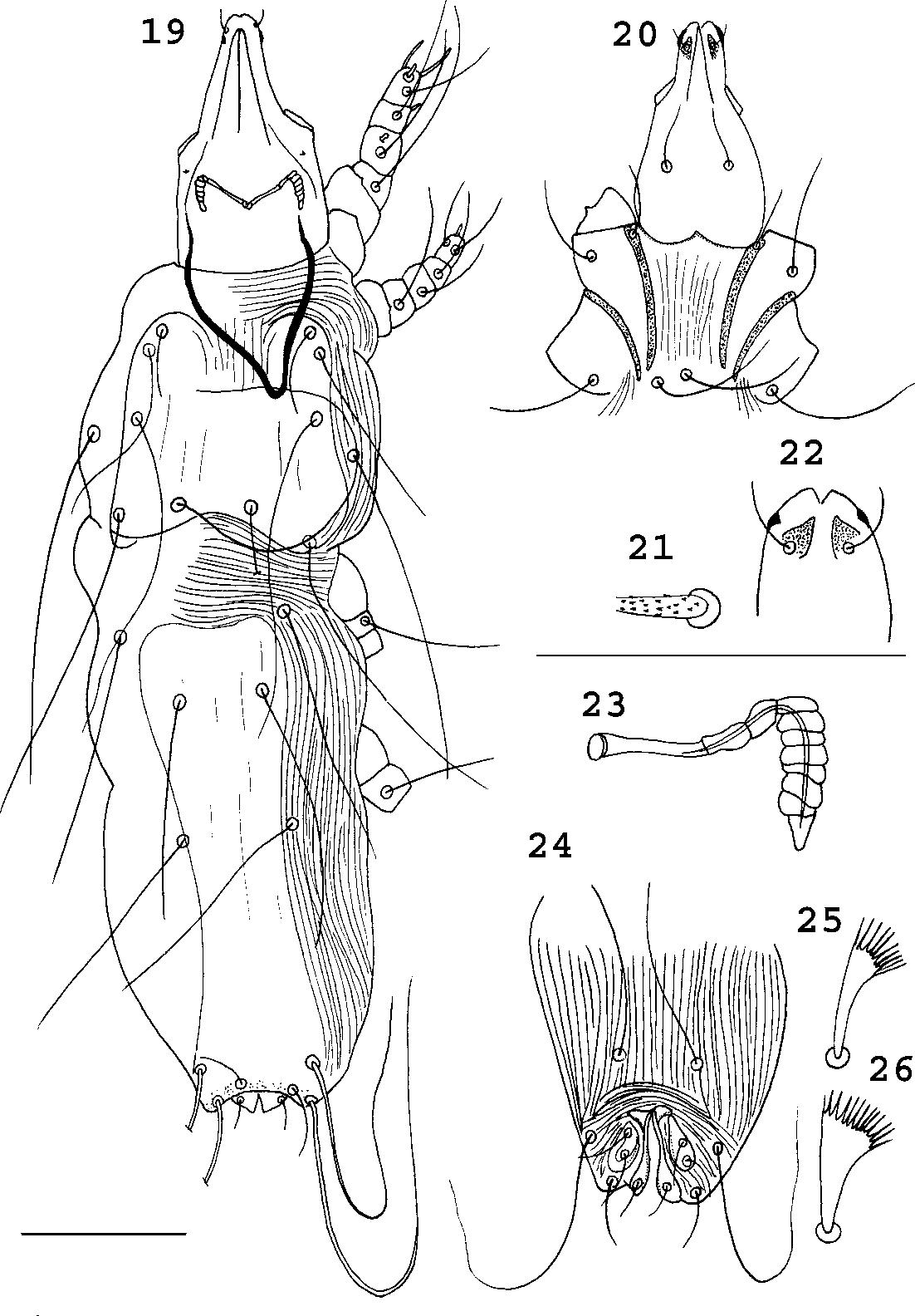 figure 19–26