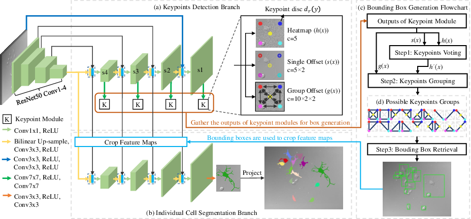 Figure 1 for Multi-scale Cell Instance Segmentation with Keypoint Graph based Bounding Boxes