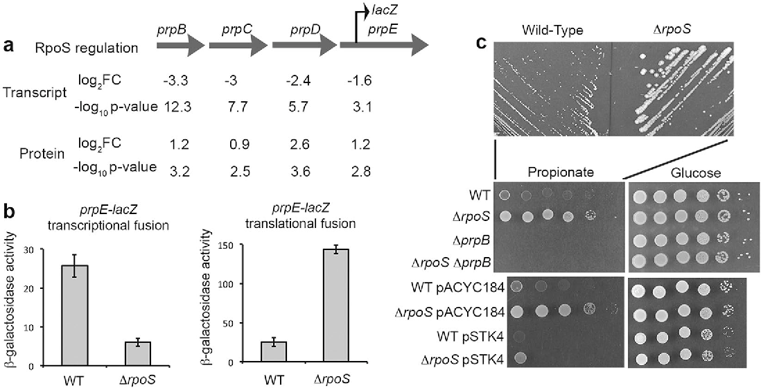 Proteome Remodelling By The Stress Sigma Factor Rposs In