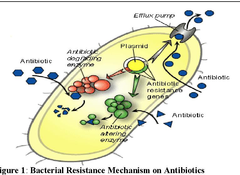 figure 1 from antibiotic resistance mechanisms of impetigo rh semanticscholar org Staphylococcus Diagram Diagram of the Strep Bacteria