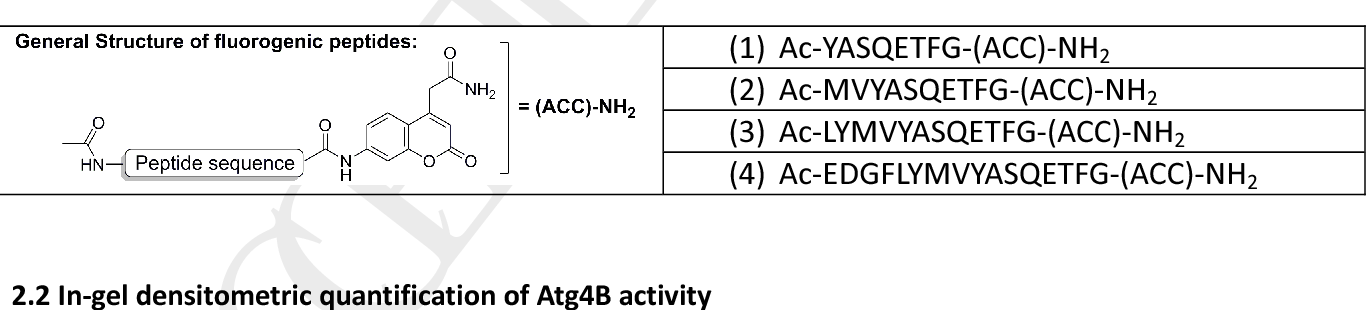 Table 1: Sequences of the fluorogenic LC3B-derived peptides evaluated as potential substrates of Atg4B