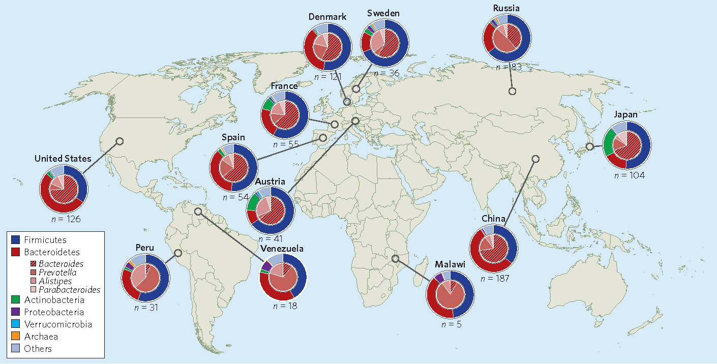 Figure 1 from an insiders perspective bacteroides as a window into figure 1 global distributions and abundances of human gut microorganisms at the phylum and genus gumiabroncs Image collections