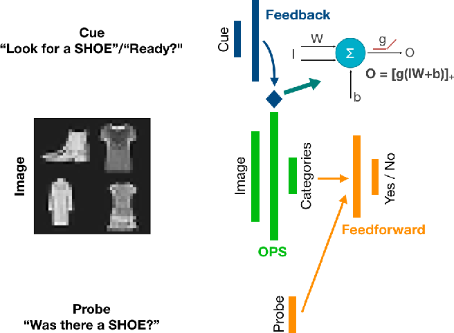 Figure 2 for The functional role of cue-driven feature-based feedback in object recognition