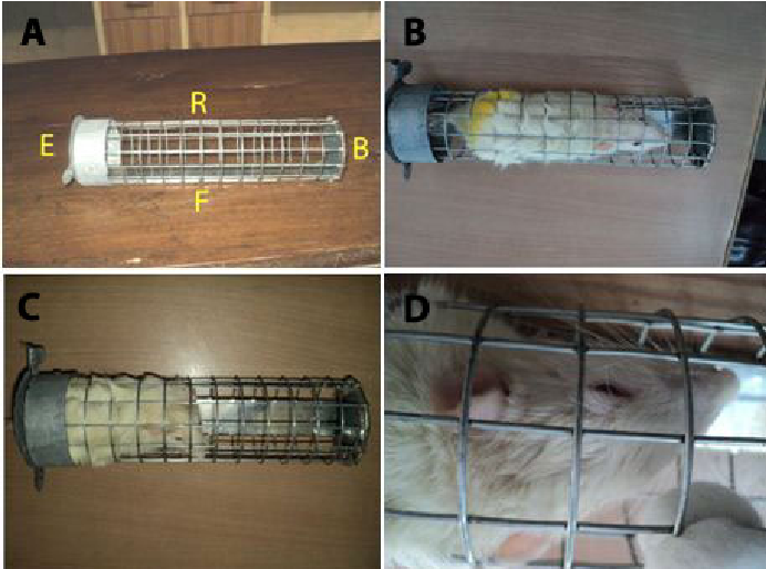 Figure 1. Immobilization cage used in the experiment (A), rat under experiment just after entry (B), trying to push the door of cage with its back (C) and depressed (D).